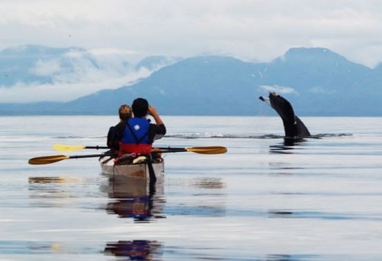 Kayaking with whales in the Icey Strait