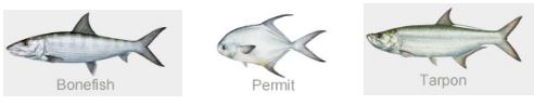 belize-fishing-lodges-permit-bone-tarpoon