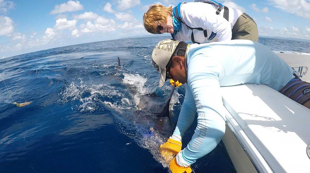 Crocodile Bay Trip Marlin Release