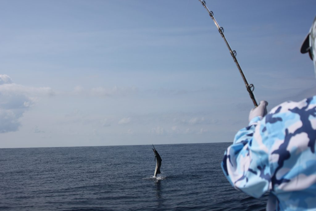 Sailfish jumping Costa Rica Fishing Trip