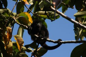 Spider Monkey Costa Rica Fishing Trip