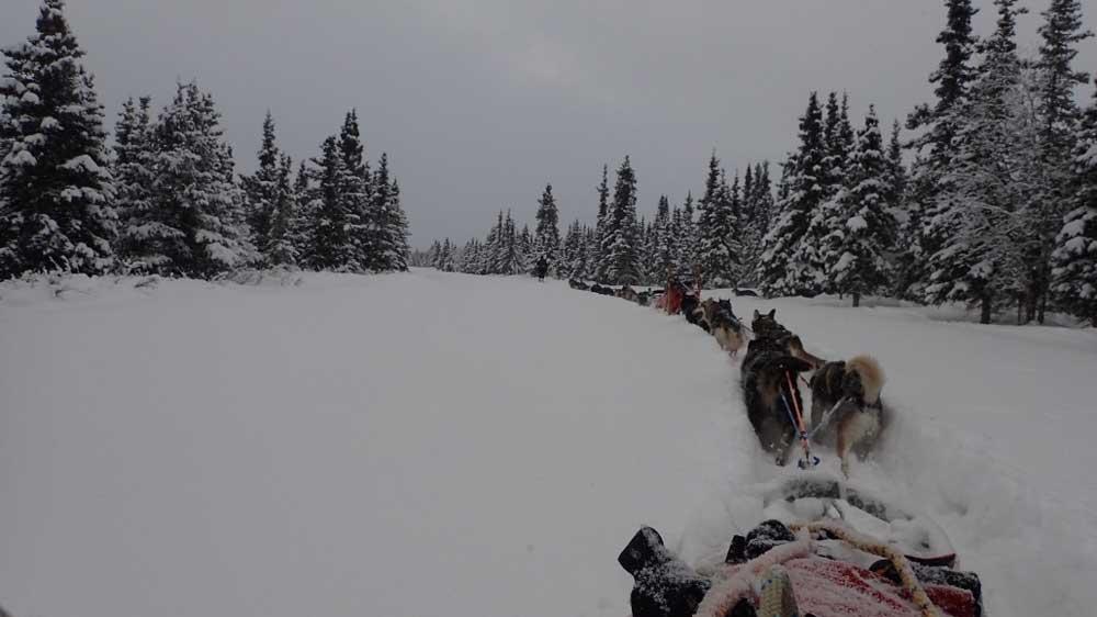 Denali National Park dog mushing