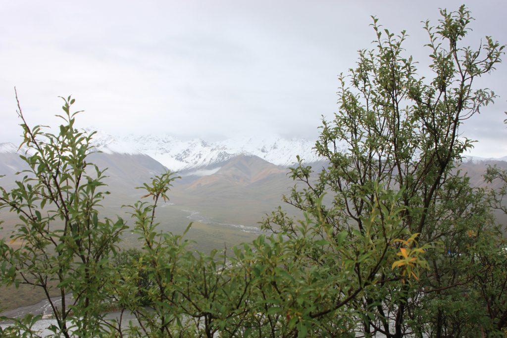 Denali National Park mountain