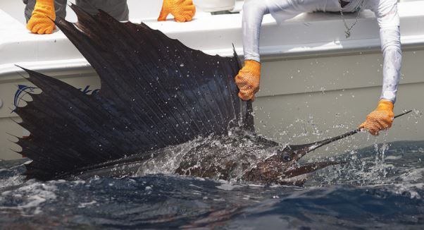 Costa Rica Sailfish by boat