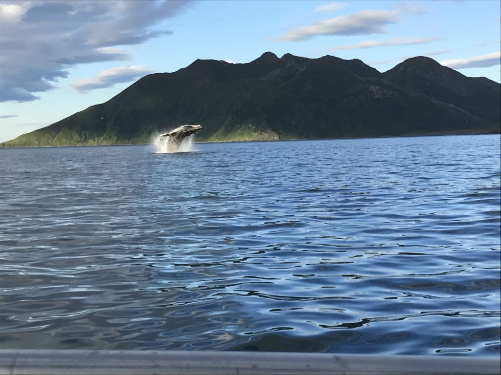 Kodiak fishing season 855-711-7773 breaching whale