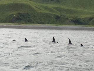 Kodiak fishing season 855-711-7773 Orcas