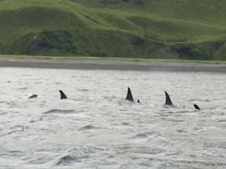 Kodiak fishing season 855-711-7773 Orcas