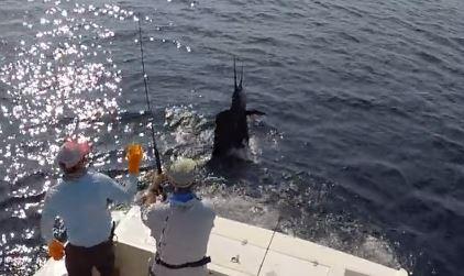 Costa Rica fishing season Marlin