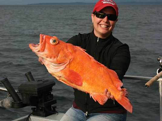 Prince of wales island fishing packages at boardwalk lodge for Alaska fish species